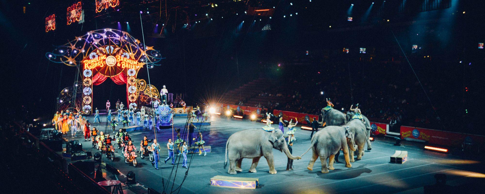 Parada in arena de circ.