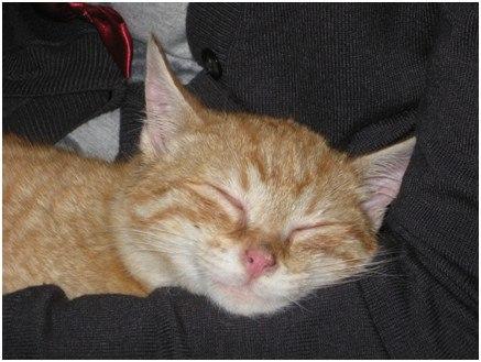 Pisoiul Morcoveata adormit.